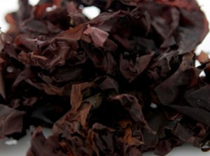 dulse_seaweed